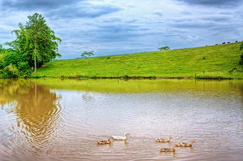 5 Patinhos na Lagoa   HDR