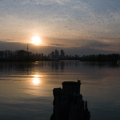 Sunset, with midges (andyscamera) Tags: sunset lake toronto canada bugs lakeontario midges lesliespit tommythompsonpark andyscamera