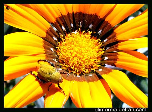 Flon con insecto
