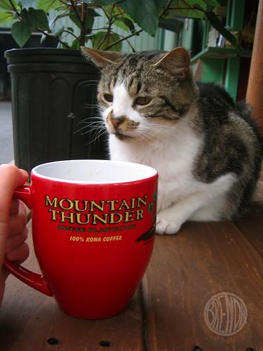 Mountain Thunder Cat