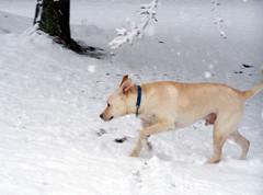 Zeus_snow32808