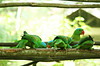 sitting parrots (pixelplated) Tags: philippines palawan canonef24105mmf4lisusm palawanwildliferescueandconservationcenter