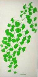 Marushka - plant (green)