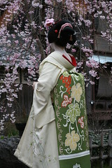 Kotoha (abbey j) Tags: japan cherry spring kyoto blossom maiko geisha  sakura  kimono obi gion shirakawa takahiro japn  kotoha