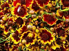 Some flower (Jayanta Mondal@flickr) Tags: fb fm qutub