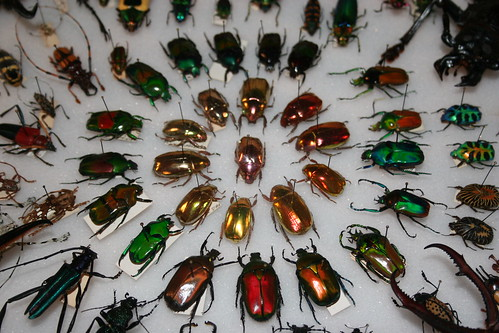 Beetles as Jewels.JPG