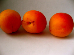 Apricots (Andrea Fields) Tags: fruit apricot