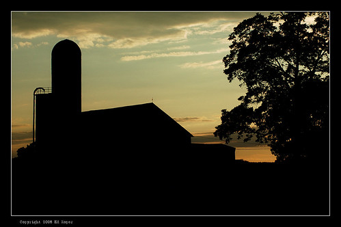 shadows of the summer farm