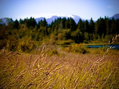wildnessly. (tbaur) Tags: lake mountains grass burnaby e3 50200mm deerlake ilikegrass