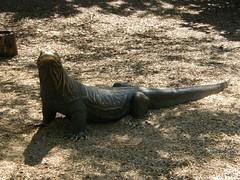DSCF5826 (dondonnellyjr) Tags: animals zoo louisvillezoo