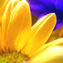 may you have a sunny weekend. (janoid) Tags: bravo xo janslightstyle janalicious janoidmagic