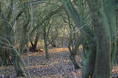 Light and shadow in the woods (James Wagstaff) Tags: kent crouch platt