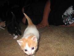 kittens 065