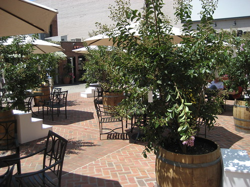 Wish Tree in Pasadena - 11