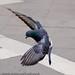 beautiful-bird