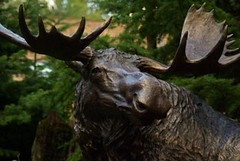 2008-08-21 Northwest Trek Moose Statue
