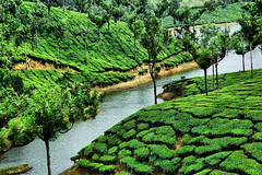 Munnar  - Tea hills (Tati@) Tags: india green landscape places kerala spices plantation munnar teahills climaticstation