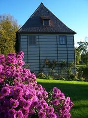 Goethes Gartenhaus in Weimar (happycat) Tags: park pink red house flower rot germany weimar thringen rosa haus we blume ilmpark parkanderilm asternovaeangliae goethesgartenhaus herbstaster raublattaster roteraublattaster