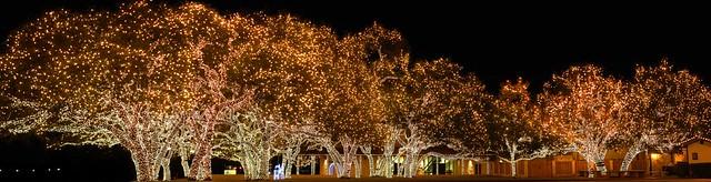 Cedar Park Christmas Lights