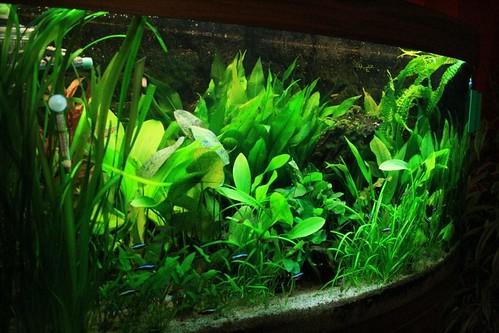Usw Einfach Zu Schmieren Aquarium 200 Ltr Filter Heizstab Pumpe Komplett Mit Unterschrank