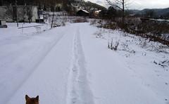 冬のサイクリングロード