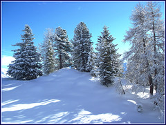 Snowy Trees on the Penken (crafteelady) Tags: blue trees white mountain snow pine austria tirol skiing postcard fir soe tyrol picnik winterwonderland zillertal christmascard mayrhofen wintry penken fotocompetition fotocompetitionbronze