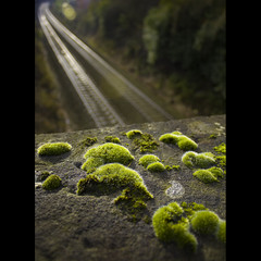 moss and tracks (FoxyMcSlick) Tags: railroad bridge trees urban plant blur macro green texture lines yellow rock metal stone wall digital corner train canon manchester eos rebel moss flora sandstone scenery track dof cheshire perspective scenic kitlens rail railway trains scene line explore hyde short views flare lichen growing shallow 1855 5000 traintrack guardian damp xsi railbridge cameraclub blueribbonwinner explored 450d platinumheartaward flickrslegend 100commentgroup foxymcslick