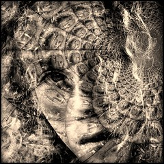 lost in my self (Amsterdamned!) Tags: portrait portraits lost retrato retratos expression emotion face faces duotone portraiture nikon surreal square eye explore topf25 hair curls ritratto bw gaze look light lighting interestingness3 topf100 world100f 1500v60f justimagine topf150 f150 platinumheartawards cubism bravo ps pointandshoot p5000 coolpix coolpixp5000 point shoot blackandwhite noiretblanc blancoynegro bn people person artlibre f200 topf200