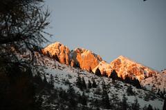 (Giacomo Carena) Tags: trees sunset snow alps pine alberi canon eos rocks tramonto val neve della alpi bergamo verdi pini roccie seriana presolana abeti dorga castione bratto sempreverdi