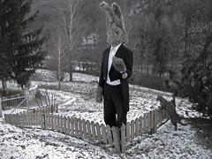 Lapin a Biacesa (il gatto) (bellimarco) Tags: light shadow red color rabbit eye ex canon colore mask conejo garage magic ghost knife ombre occhi neve demon devil marco mago rosso belli gatto fantasma luce lapin decadence diavolo maschera alchemy deus magia coniglio alchimia drak orrore machina maligno decadenza manichino giudizio surreale cilindro coltelli peloso orecchie panno demone malefico cattedra 40d evocazione feticcio perlomeno