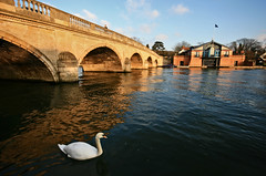 Golden hour at Henley-on-Thames (s0ulsurfing) Tags: uk bridge blue trees winter light shadow england sky cloud sunlight reflection bird english water weather thames clouds reflections river gold golden swan december skies arch riverside bright britain patterns flag wide beak wideangle reflected getty british fowl riverbank 2008 riverthames tidal henley oxfordshire goldenhour afloat henleyonthames oxon cygnusolor 10mm englishness sigma1020 s0ulsurfing aplusphoto