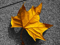 Luz del atardecer (hiskinho) Tags: bw color detail macro hoja cutout bn texturas suelo haz envs