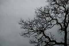 Trd (pellesten) Tags: bw vinter stockholm trd vasastan birkastan svartvitt