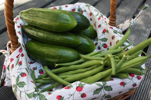 Cucumbers + Beans