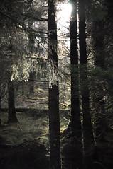 Loch Ard Forest (Elizabeth MacDonald (BIF1)) Tags: trees winter snow sunshine woodland scotland nikon frost leafs d90 lochard
