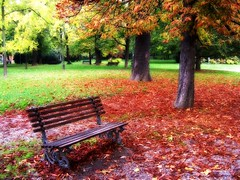 red bench (Imagiphotu) Tags: nature foglie this photo rocks natura erba modena autunno rosso panchina noreflex compatta homersiliad vosplusbellesphotos