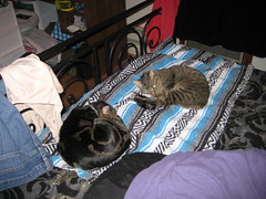 IMG_1761 (fadingembers) Tags: animals stormy kitties breeze