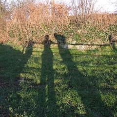Shadows 'n' all (Ceridwen*M) Tags: winter shadow dog bunnies field labrador walk rabbits february alsation ynysmon anglesey holyhead bryngwran february09 labsation