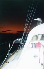 920912 Hitchhikers (rona.h) Tags: september 1992 cacique southchinasea ronah vancouver27 bowman57