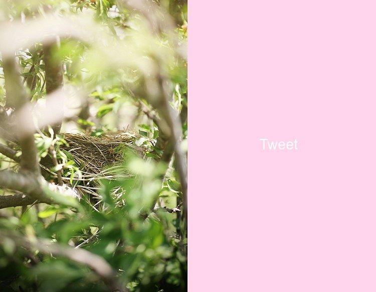05-12-nest1