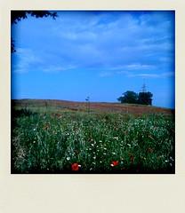 domeniche di maggio #1 (Laura - beatandlove.it) Tags: campo papaveri tuscia