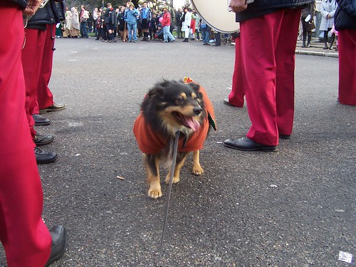 casagreta Birillo alla processione dei Magi 6gen08 - 100_3013 da Casa Greta.