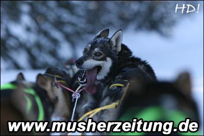 Shy Wolf_QL9T1131_WEB