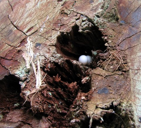 gecko eggs lalbagh 220308