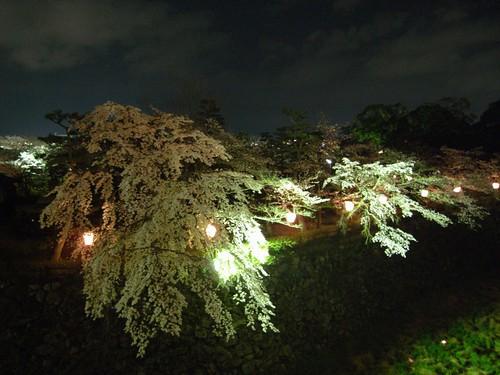 郡山城跡(夜桜)-04