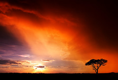 AFRICA (| HD |) Tags: africa sunset hot tree 20d silhouette canon landscape kenya safari hd darwish hamad