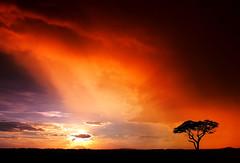 AFRICA (| HD |) Tags: africa sunset hot tree 20d silhouette canon landscape kenya safari hd darwish hamad
