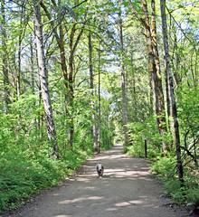 path with robinson