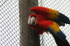 Macaw (Mandy Verburg) Tags: canon zoo blijdorp parrot macaw ara animalpark dierentuin papegaai dierenpark thebiggestgroup eos400d mandyarjan