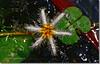 ƒ22 experiment (Shabbir Ferdous) Tags: green whiteflower photographer f22 bangladesh bangladeshi nymphoidesindica blueribbonwinner barisal canoneosrebelxti shabbirferdous sigmazoomtelephoto70300mmf456apodgmacro wwwshabbirferdouscom shabbirferdouscom